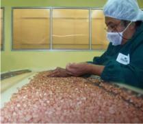 Производство арахиса